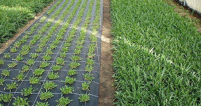 агроткань для мульчирования почвы, агротекстиль